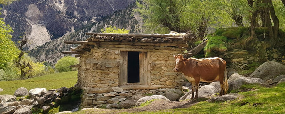 Kalash, Chitral valley